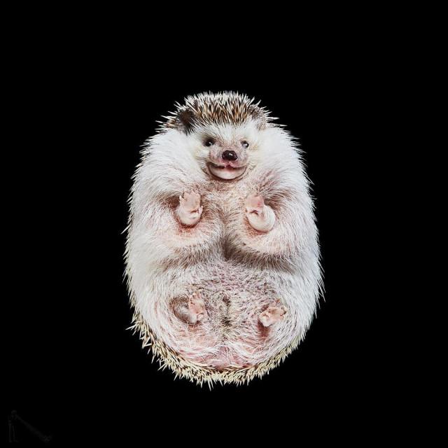 «Взгляд снизу»: чудные фотографии животных в проекте Андриуса Бурбы