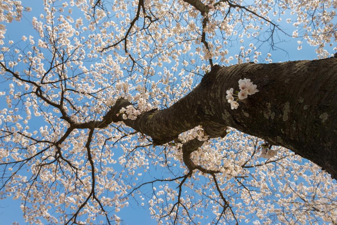 интересные картинки весна горячими ножницами помогает