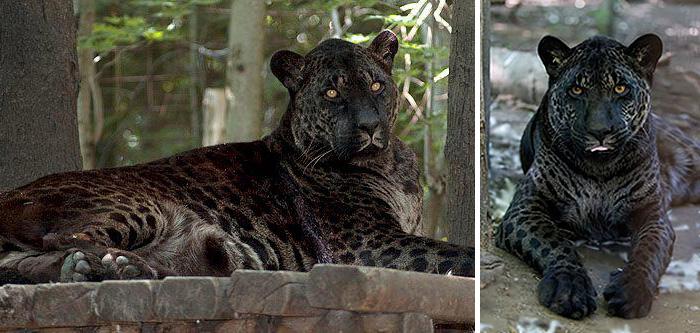 18 гибридных животных, в существование которых трудно поверить-161