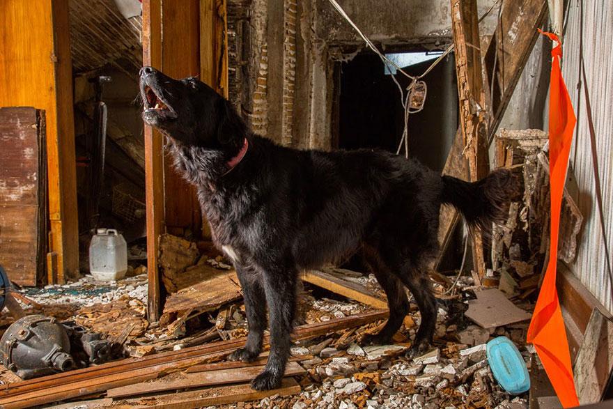 Портреты самых трудолюбивых собак в мире от Эндрю Флейдбо-20