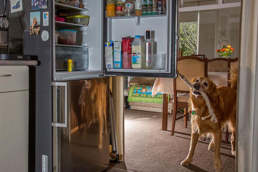 Портреты самых трудолюбивых собак в мире от Эндрю Флейдбо-29