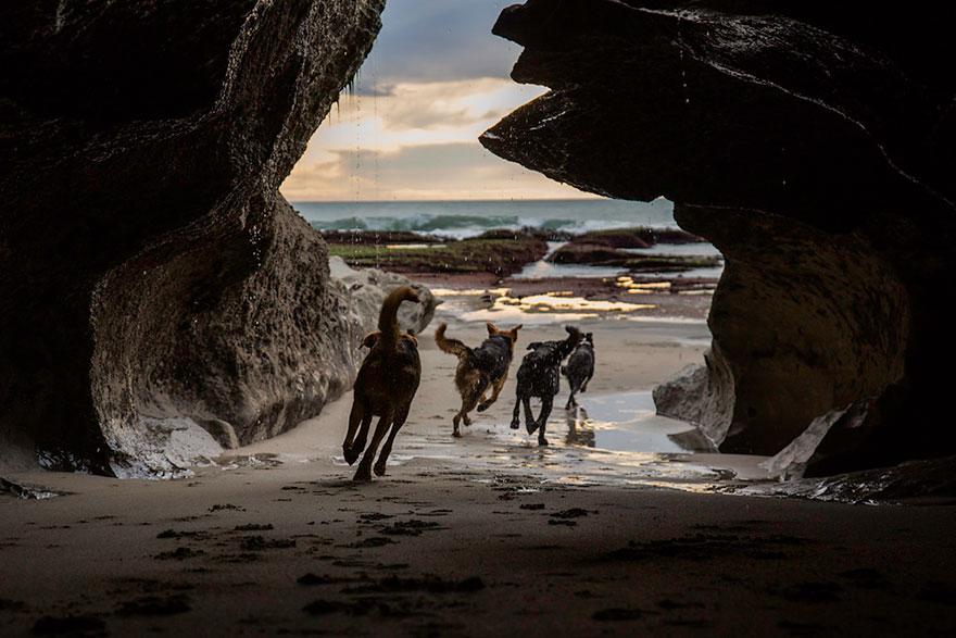 Портреты самых трудолюбивых собак в мире от Эндрю Флейдбо-7