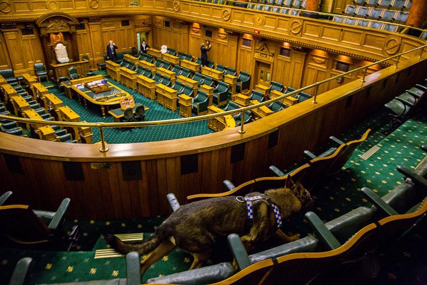 Портреты самых трудолюбивых собак в мире от Эндрю Флейдбо-23