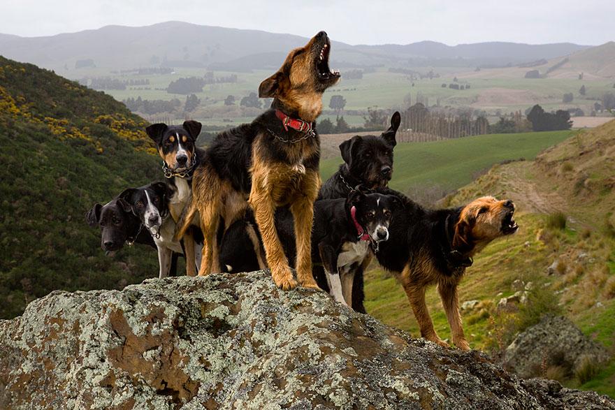Портреты самых трудолюбивых собак в мире от Эндрю Флейдбо-9