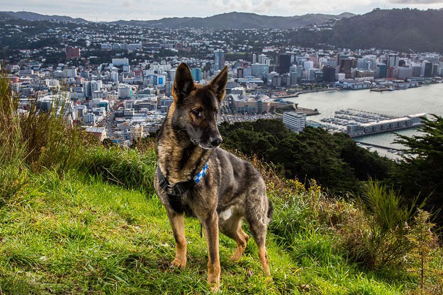 Портреты самых трудолюбивых собак в мире от Эндрю Флейдбо-24