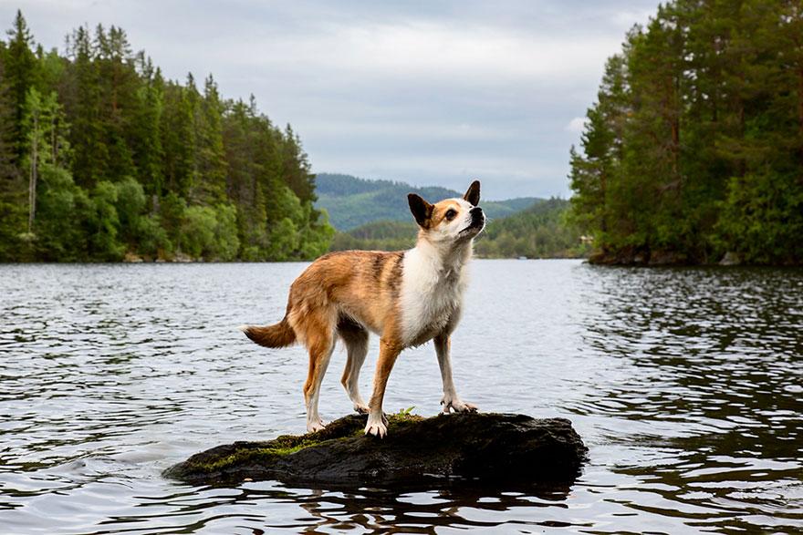 Портреты самых трудолюбивых собак в мире от Эндрю Флейдбо-15
