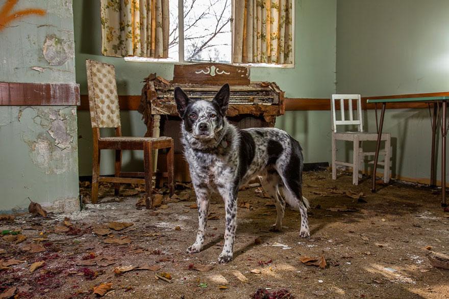 Портреты самых трудолюбивых собак в мире от Эндрю Флейдбо-21