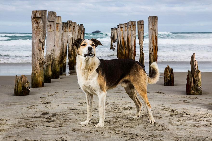 Портреты самых трудолюбивых собак в мире от Эндрю Флейдбо-10