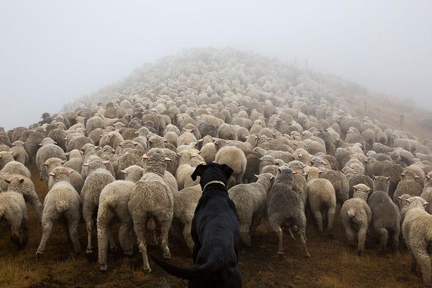 Портреты самых трудолюбивых собак в мире от Эндрю Флейдбо-11