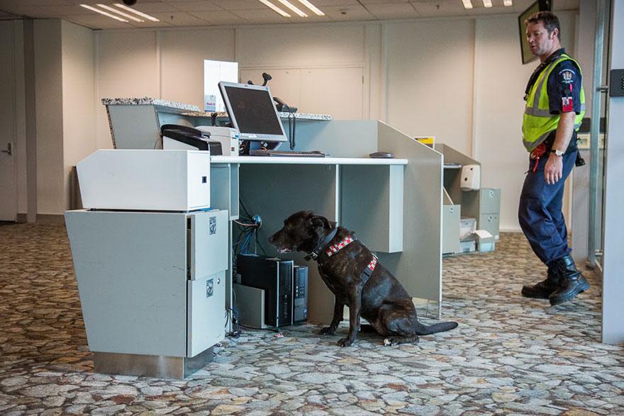 Портреты самых трудолюбивых собак в мире от Эндрю Флейдбо-22