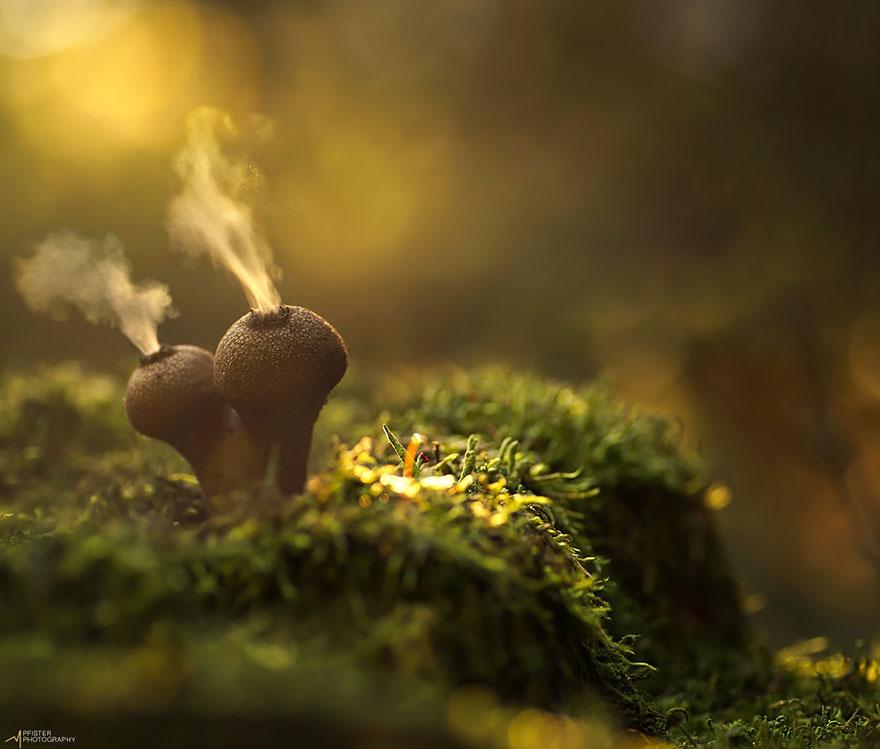 Светящиеся грибы в фотографиях Мартина Пфистера-3