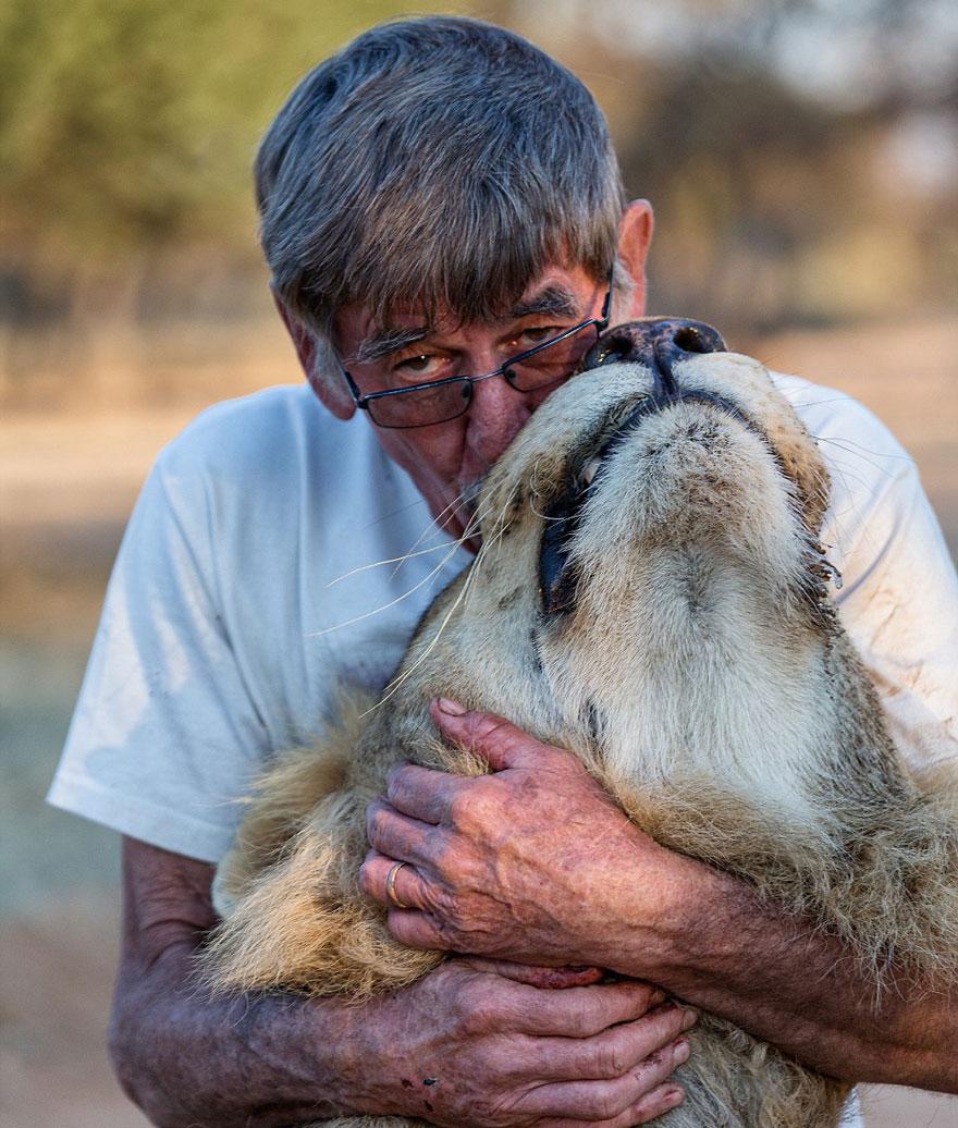 Лев 11 лет дружит с человеком, который его вырастил-5