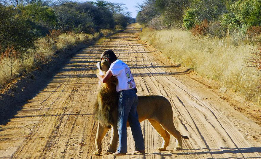 Лев 11 лет дружит с человеком, который его вырастил-4
