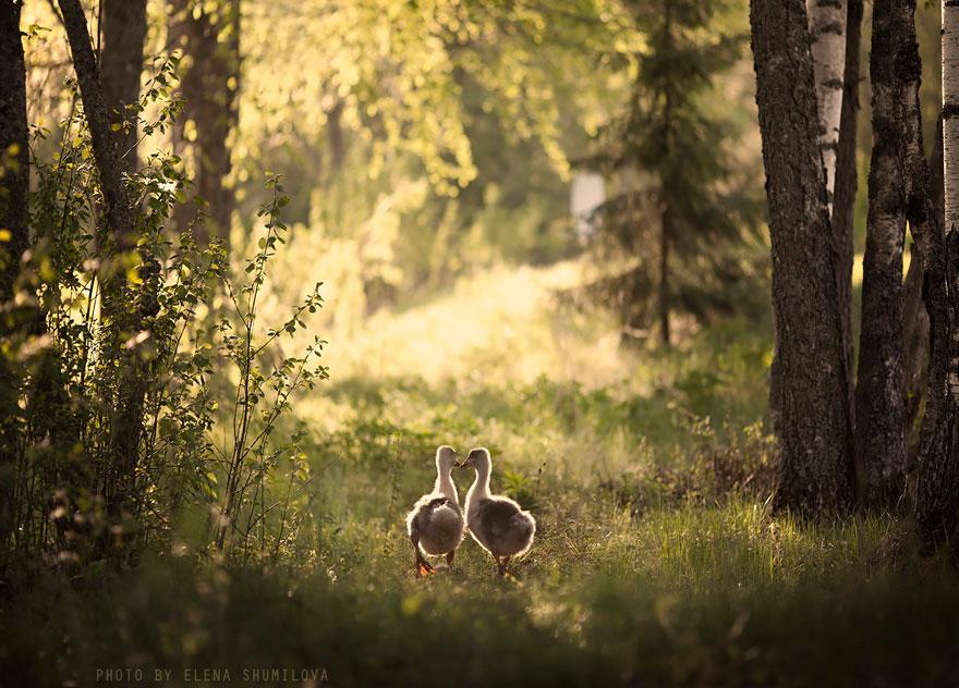 Деревенская идиллия в фотографиях Елены Шумиловой-2