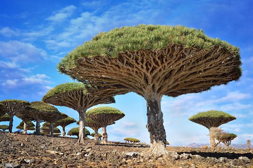 24-40 чудесных мест на Земле с удивительными инопланетными пейзажами