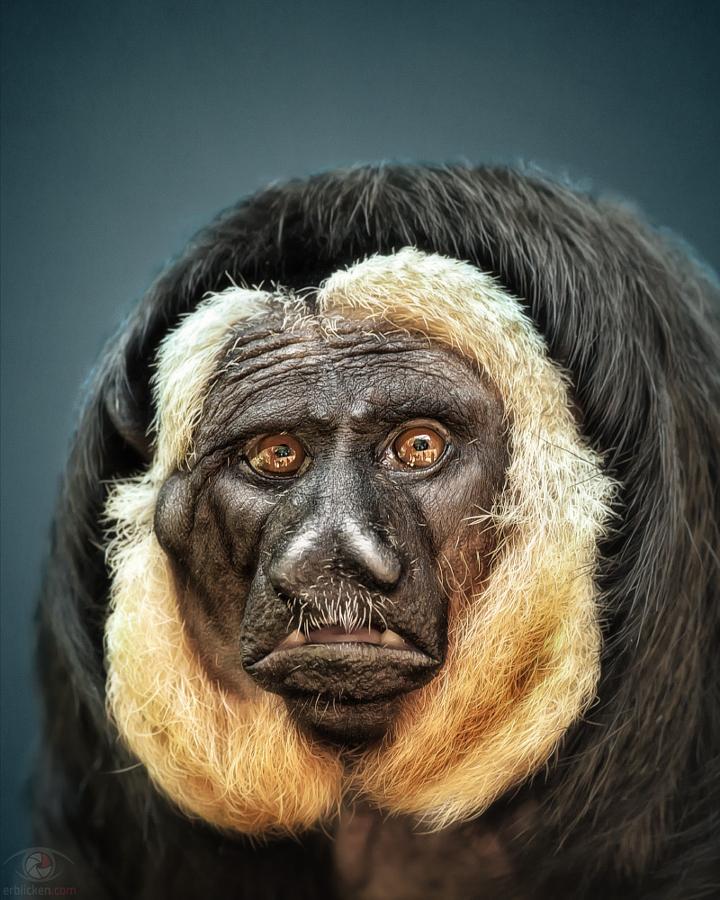 23 выразительных портрета животных от Мануэлы Кульпа