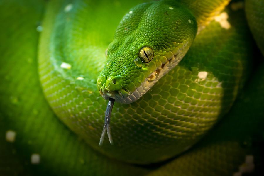 Картинки про милых змеев