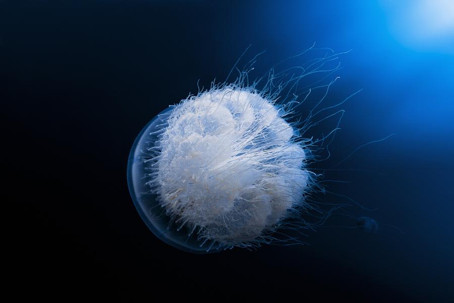 30 почти космических фотографий медуз