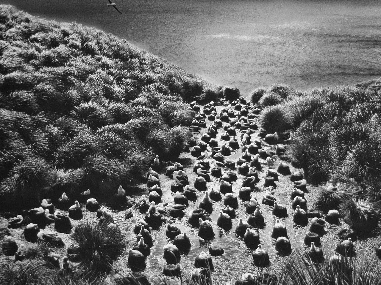 сальгадо себастьян фотографии смотреть любом коллективе