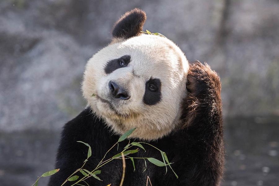 Днем, панда смешные картинки