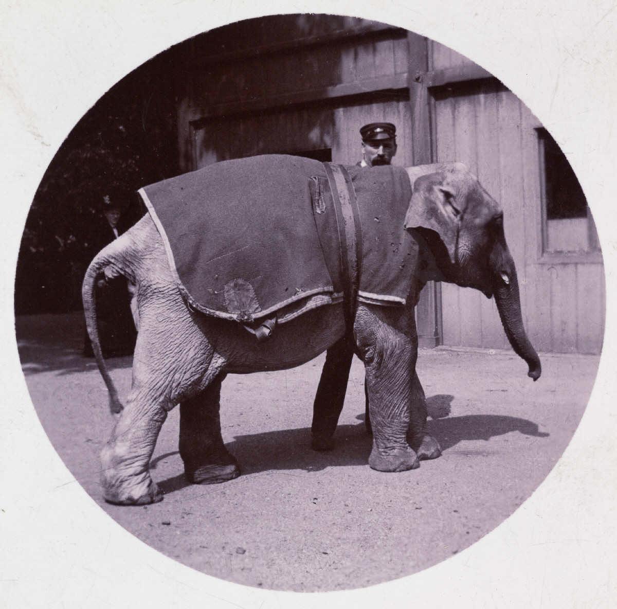 pervye snimki s fotokamery Kodak 3