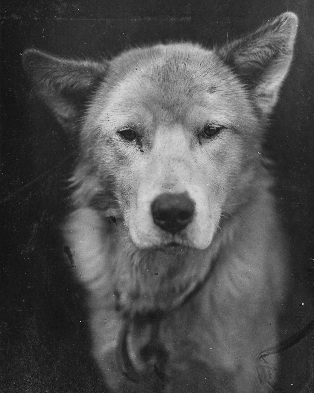 Fotografii Imperskoy transantarkticheskoy ekspeditsiey 34