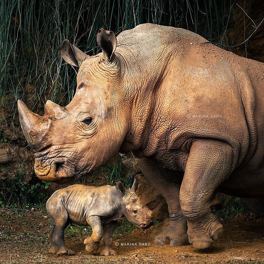 Фото животных со всей планеты