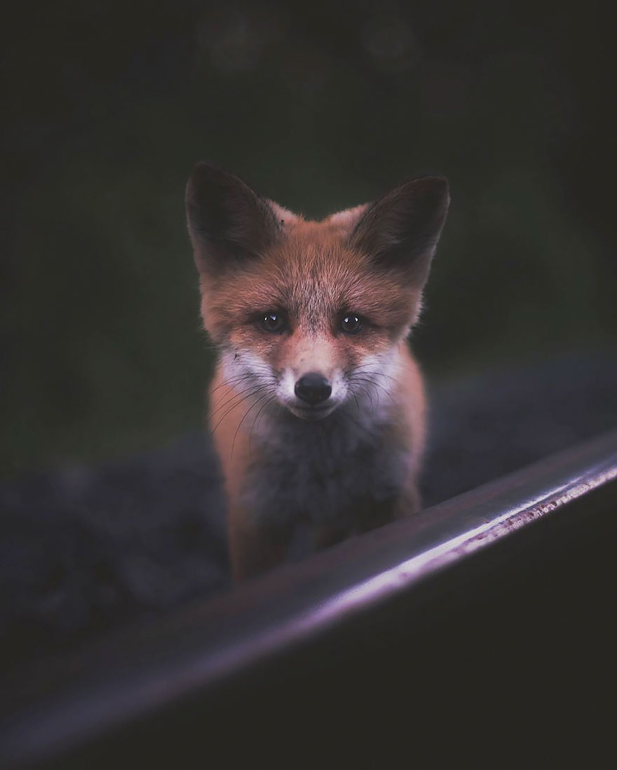 Душа леса. Фотограф Конста Пункка-1