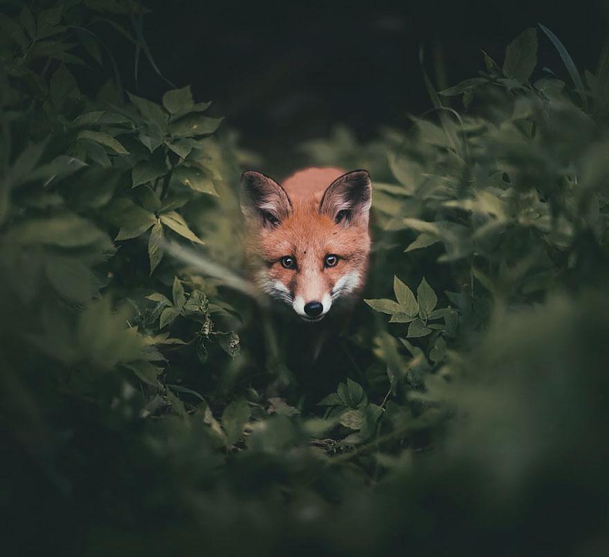 Душа леса. Фотограф Конста Пункка-8