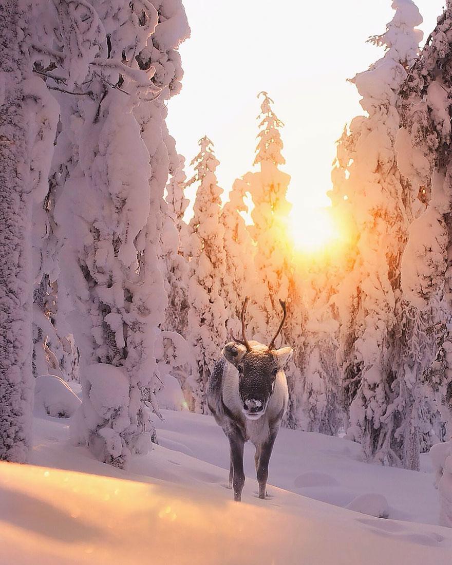 Душа леса. Фотограф Конста Пункка-21