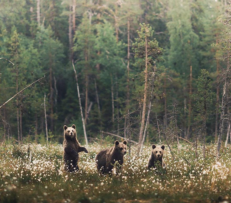 Душа леса. Фотограф Конста Пункка-15