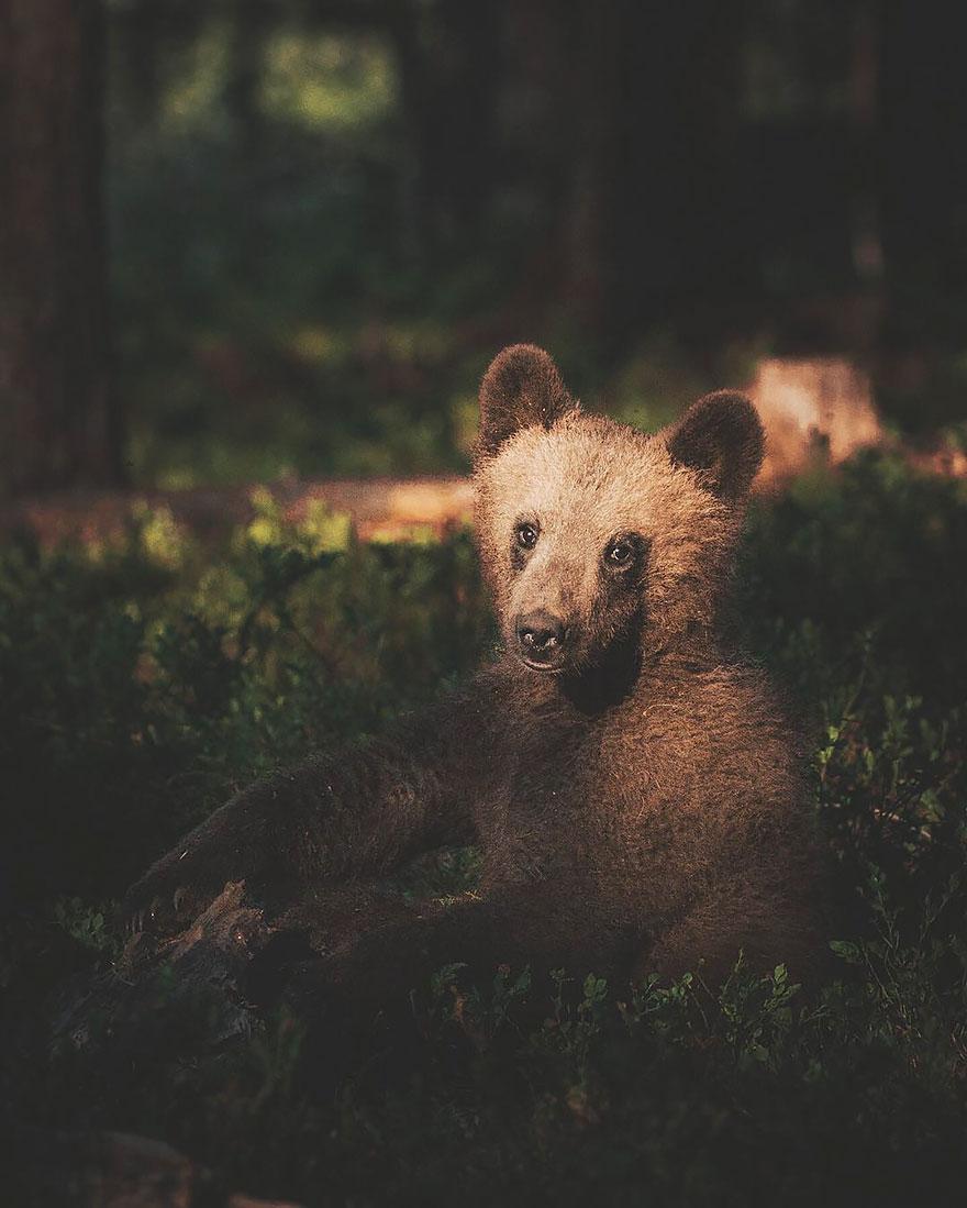 Душа леса. Фотограф Конста Пункка-14