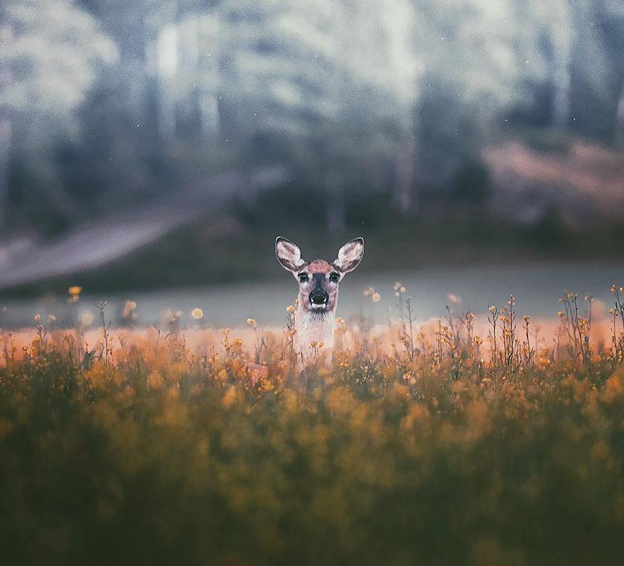 Душа леса. Фотограф Конста Пункка-11