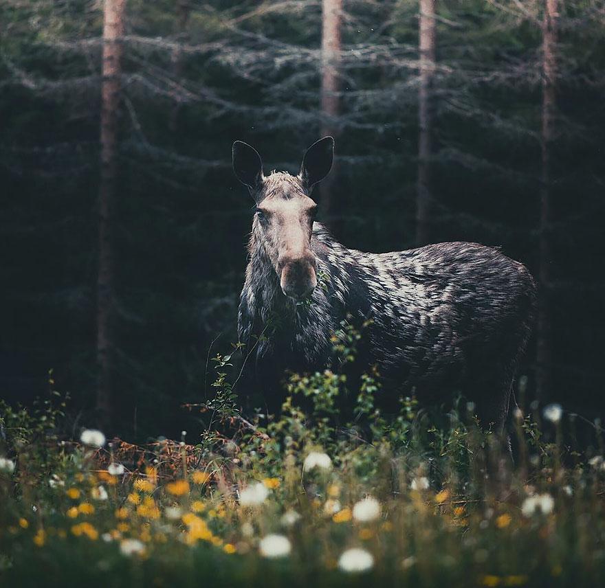 Душа леса. Фотограф Конста Пункка-12