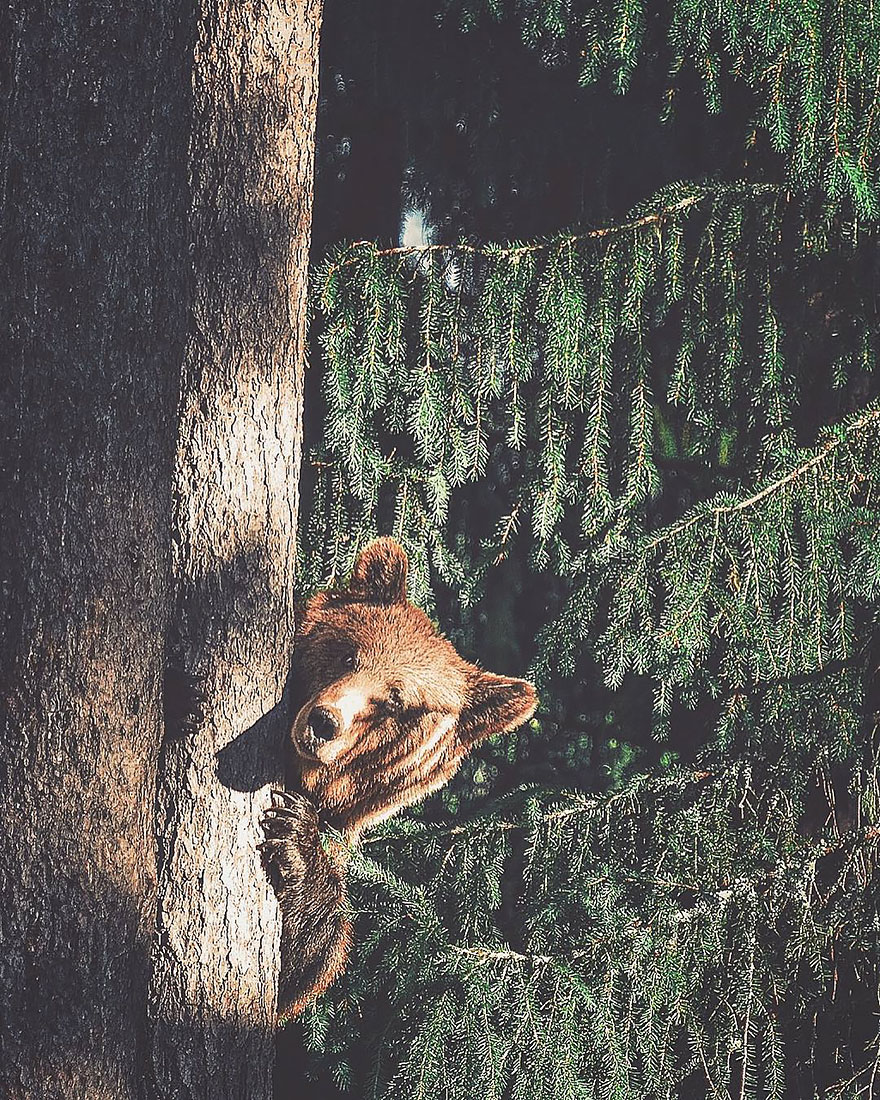 Душа леса. Фотограф Конста Пункка-7