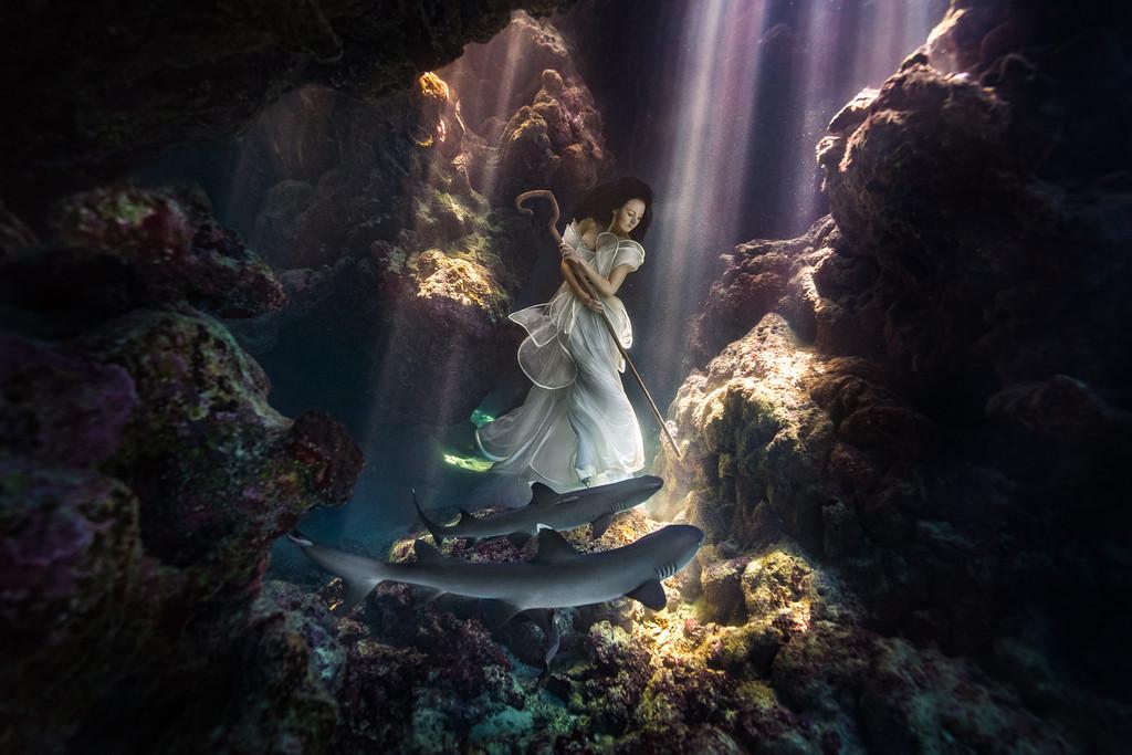 podvodnye portrety s akulami fotograf Bendzhamin fon Vong 1
