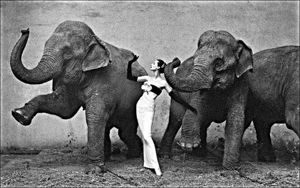 Классик фотоискусства Ричард Аведон - 12