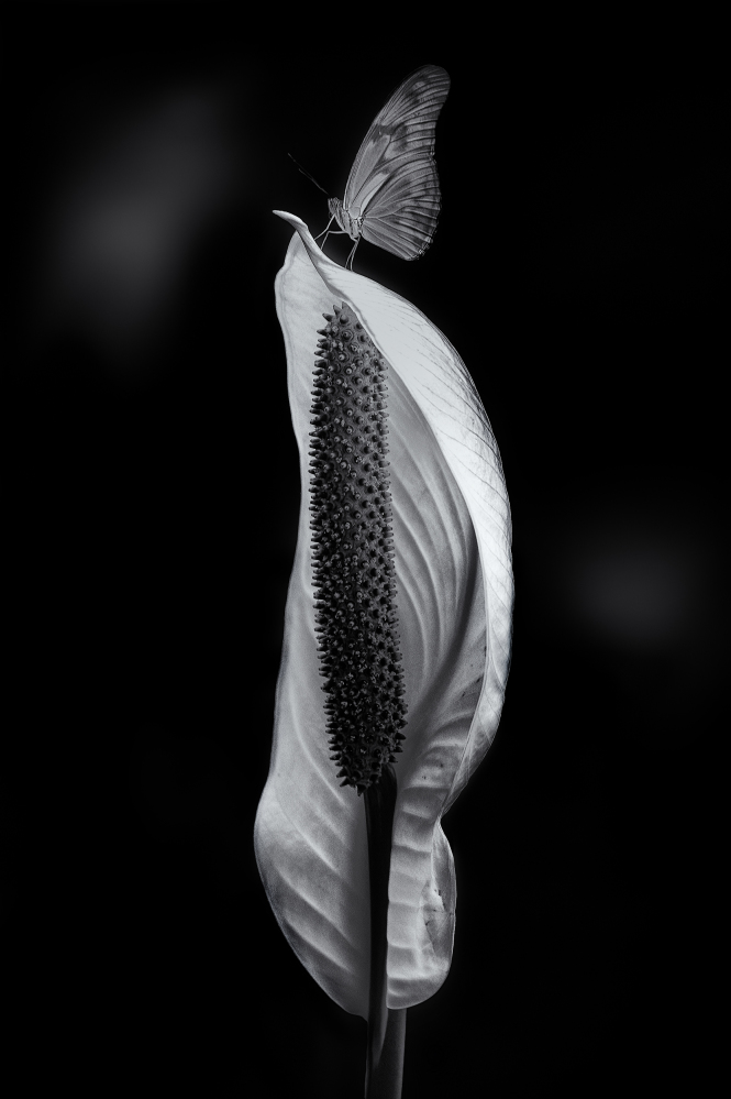 Искусство черно белой фотографии работа в вебчате котовск