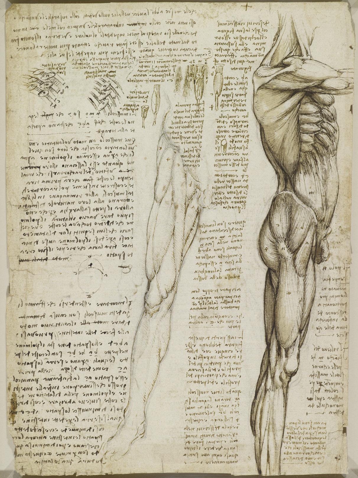 да винчи картинки анатомические вещь, сделанная своими