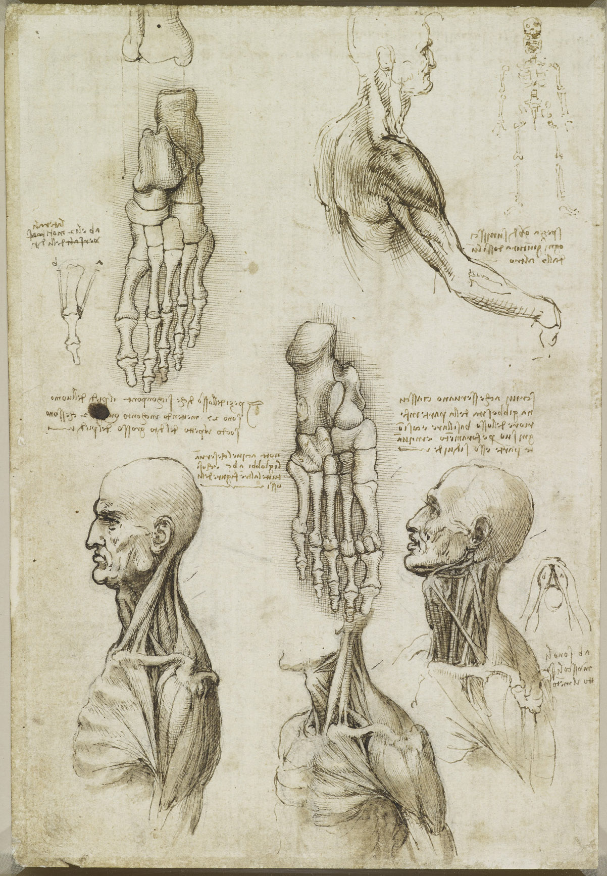 renaissance science drawings - 640×948