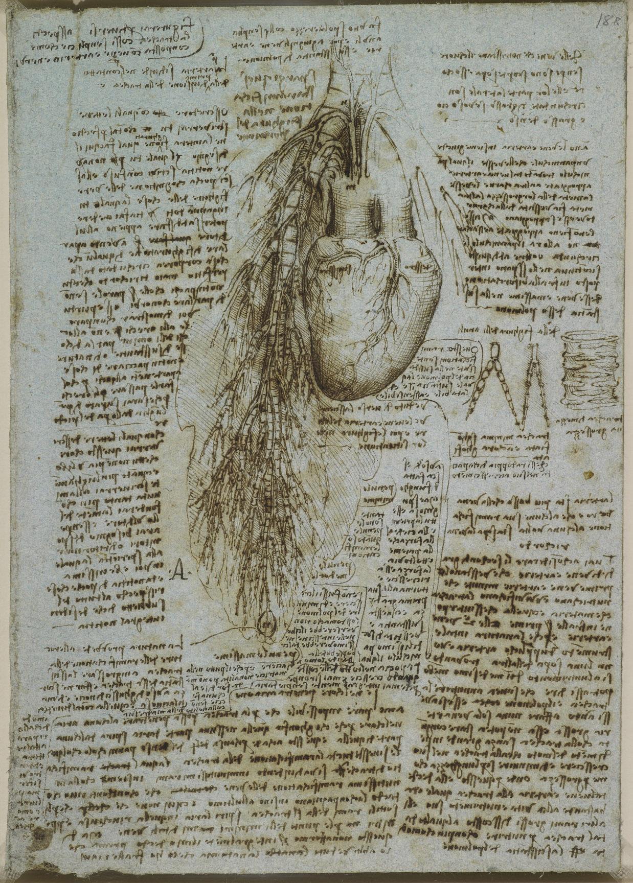 Про, анатомические картинки леонардо да винчи