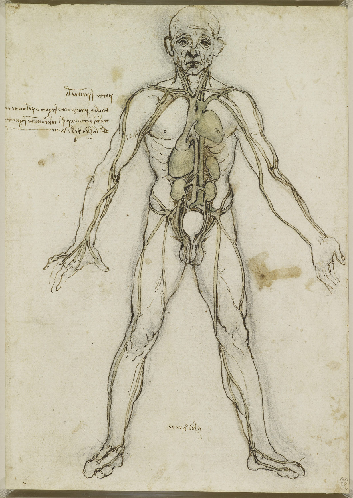 renaissance science drawings - HD 1010×1430