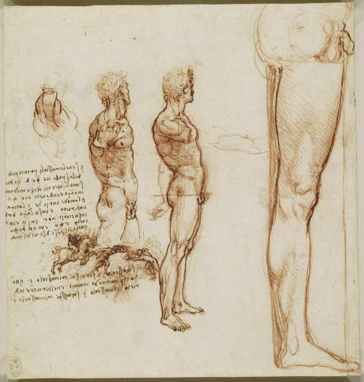 Рисунки леонардо да винчи анатомия