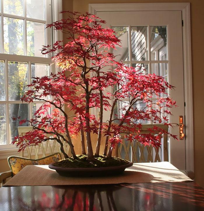 iskusstvo bonsay foto 1