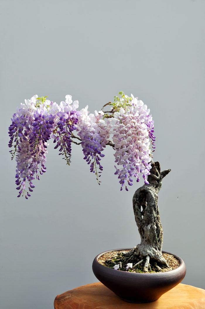 iskusstvo bonsay foto 10