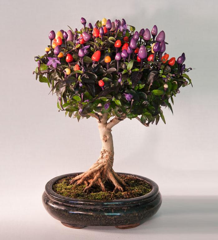 iskusstvo bonsay foto 13