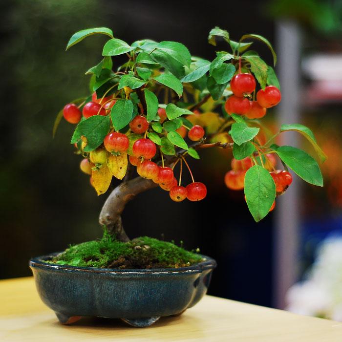 iskusstvo bonsay foto 15