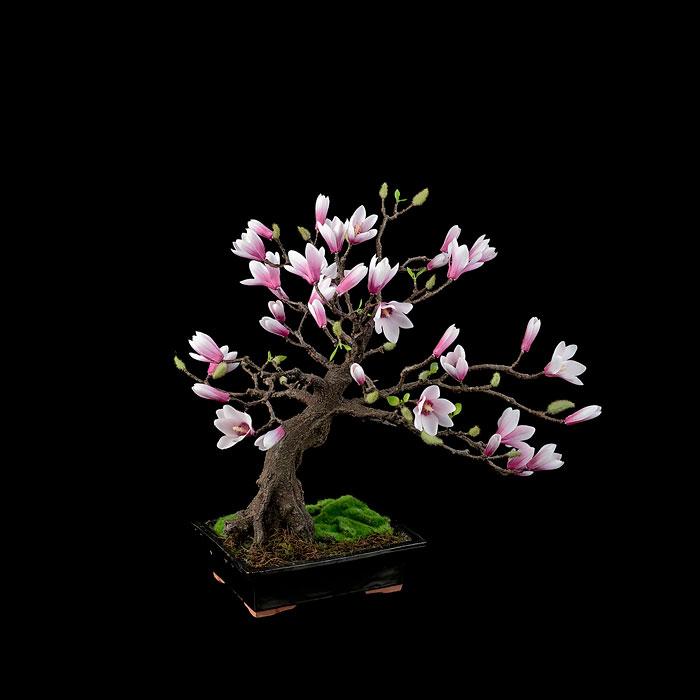 iskusstvo bonsay foto 16