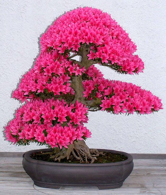 iskusstvo bonsay foto 17