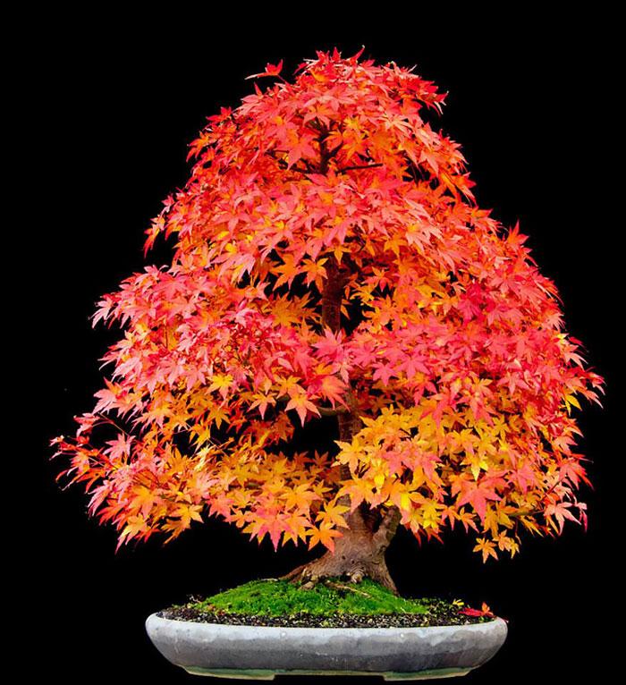 iskusstvo bonsay foto 19